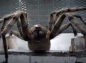 What Did YOU Think of the 4th Episode of Series 11? Rate Arachnids in the UK