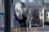 arachnids-uk-trailer-next